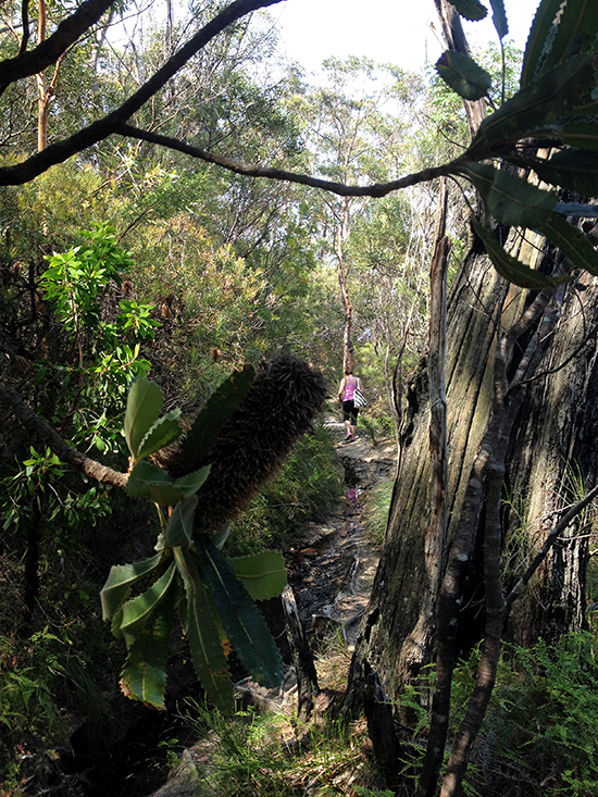 Wentworth Falls Bushwalking