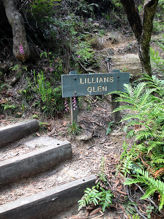 Blue Mountains National Park, Lillians Glen