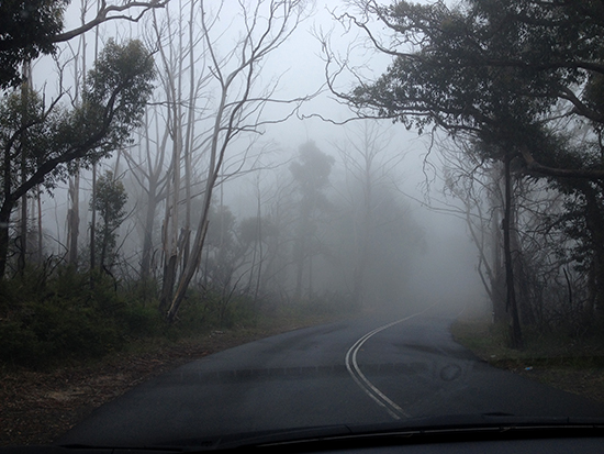 Throught the Blue Mountains Fog
