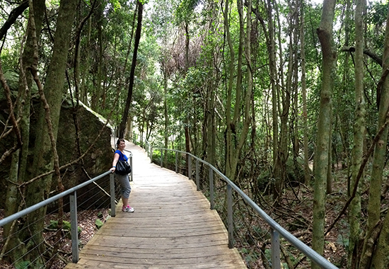 Katoomba Bush Walk