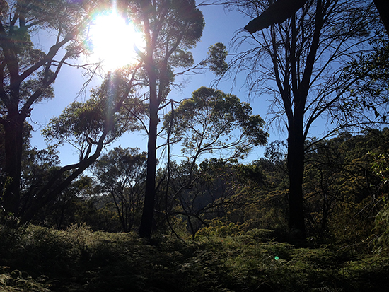 Harold Reid Reserve Walk