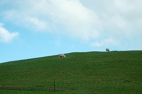 2014 New Zealand (1421)