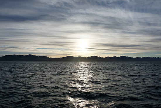 Kaikoura Dusky Dolphin Swim