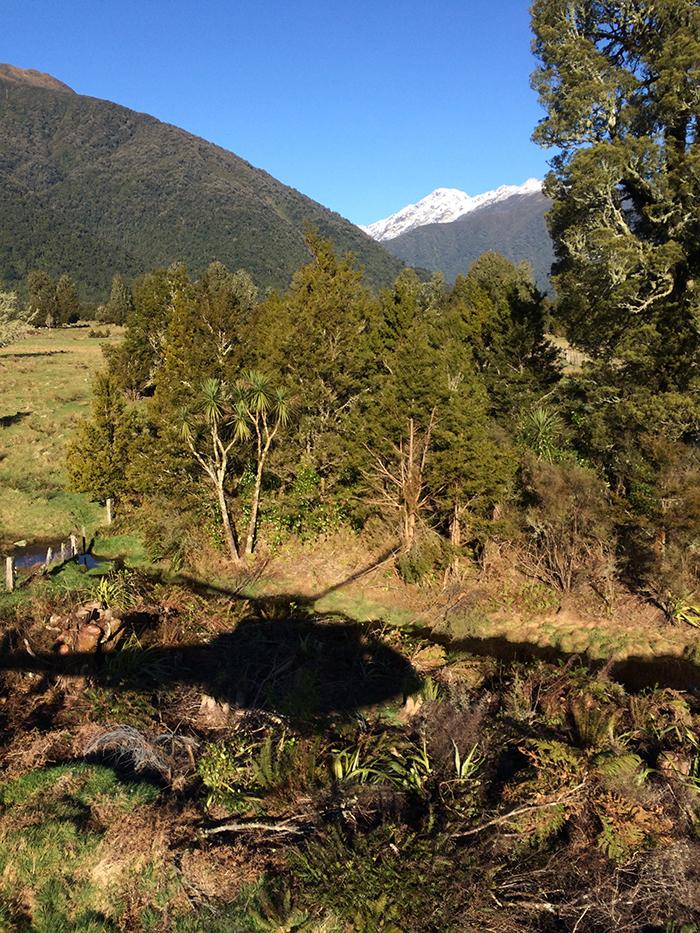 2014 New Zealand (2859)