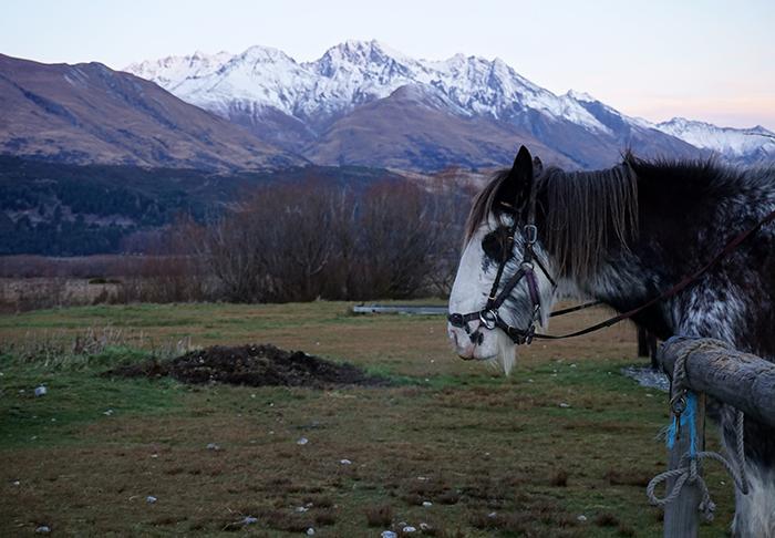 2014 New Zealand (2972)