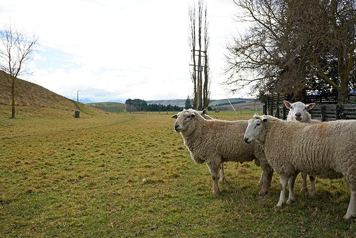 2014 New Zealand (3452)