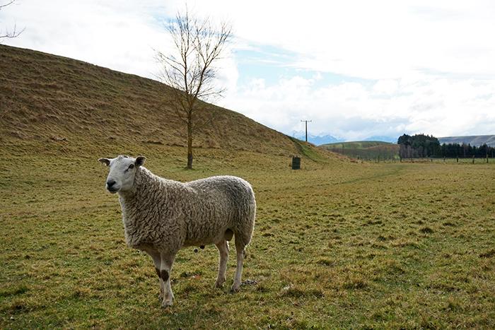 2014 New Zealand (3466)