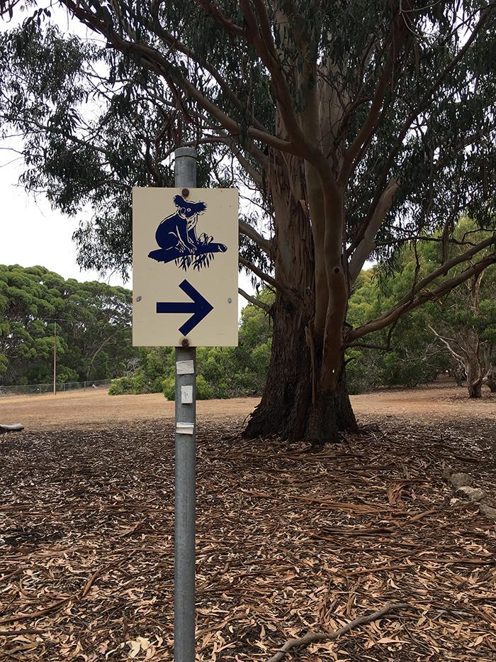 Kangaroo Island Tour - Koalas
