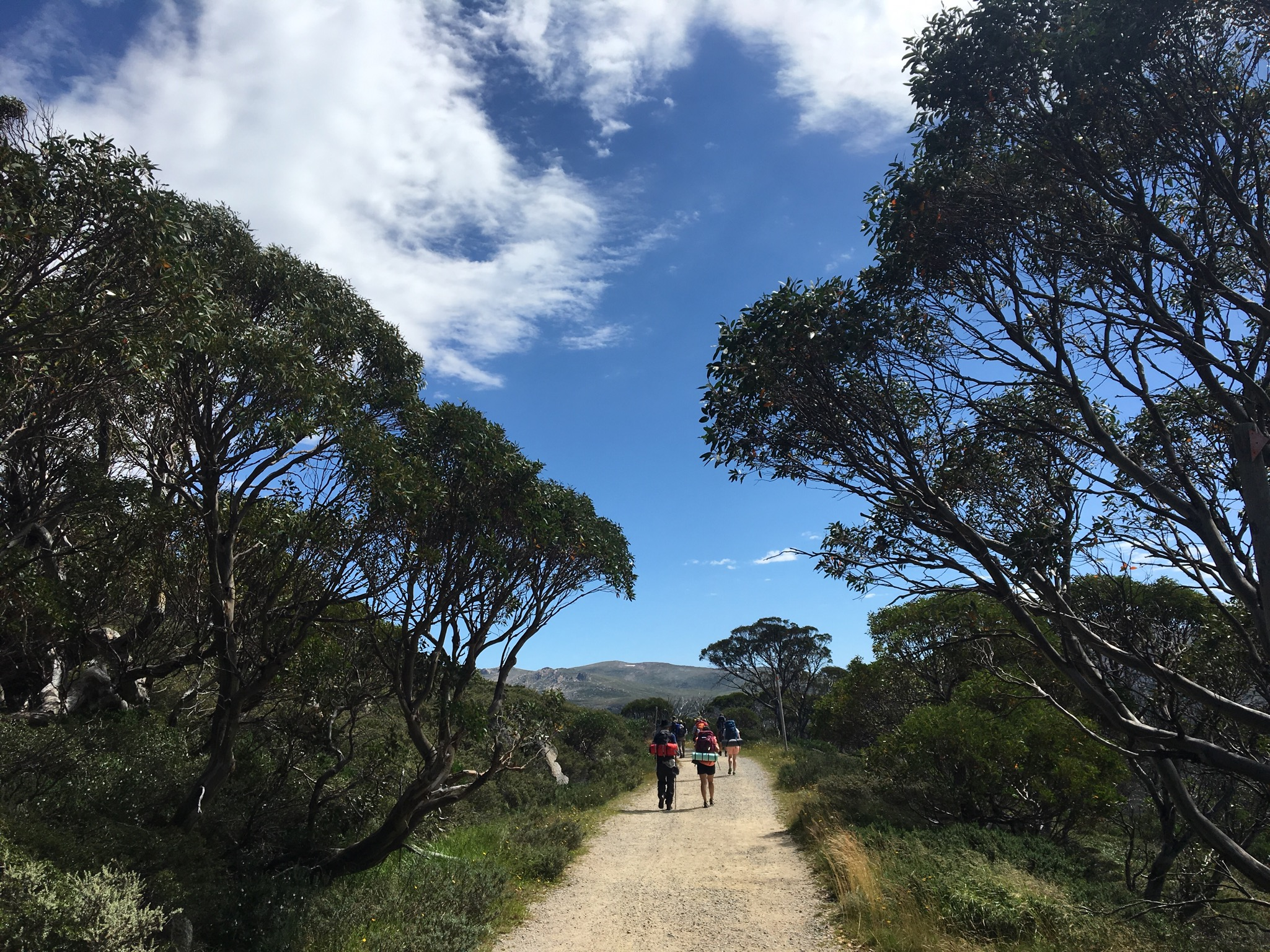 Mt Kosciuskzo Hike